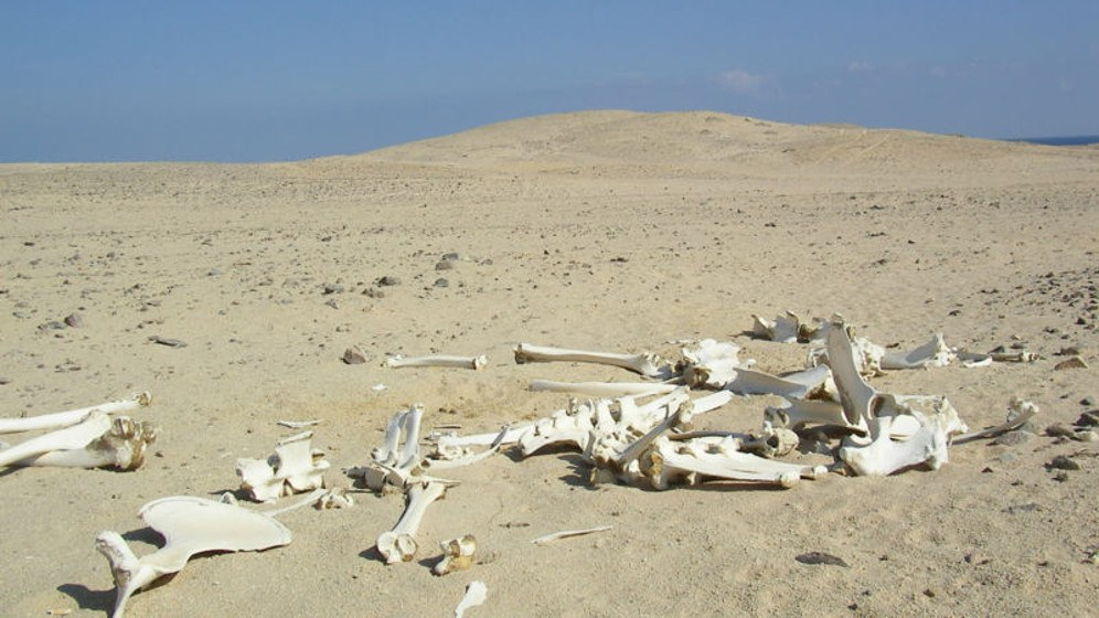 Dürre in Afrika (foto: Gemeinfrei)