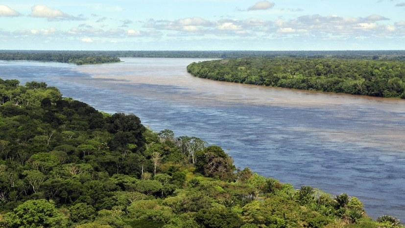 """Faschistischer Präsident Bolsonaro will die """"grüne Lunge"""" abholzen"""