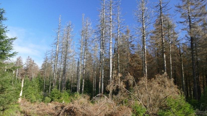 Die AfD und der Thüringer Wald