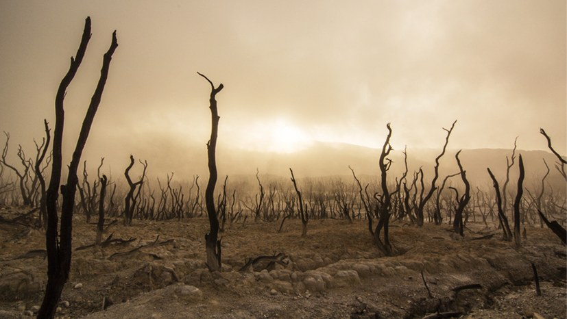 Neue Erscheinungen im Übergang zur globalen Umweltkatastrophe